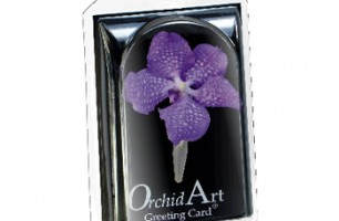 Orchid Art greeting Card | Anco Orchideeën B.V.